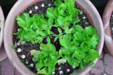 Aktualności z warzywnika